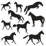 Black horses silhouettes on white background. Vector black horses silhouettes on white background Stock Photos