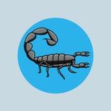 Black Hottentotta Tamulus Scorpion Stock Photos
