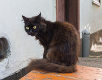 The black house cat sits on a chair Stock Photos