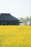Black House Beside Yellow Petal Flower Royalty Free Stock Images