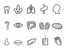 Black human anatomy outline icon Stock Photography