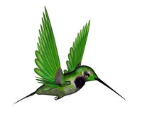 Black hummingbird - 3D render. Black hummingbird flying isolated in white background - 3D render Stock Images