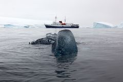 Black ice block with research boat in the background, Antarctica Stock Photo