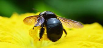 Black insect Stock Image