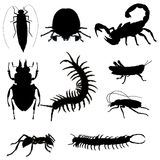 Black insects Stock Image
