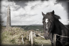 Black Irish horse and ancient round tower Royalty Free Stock Photography