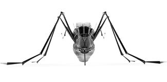 Black isolated mosquito Royalty Free Stock Photo