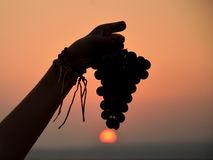 Black Israeli grapes Stock Photos