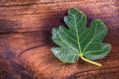 Black jack figs leaf looks like maple leaf on dark tone teak woo Royalty Free Stock Images