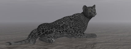 Black jaguar resting - 3D render Royalty Free Stock Photography