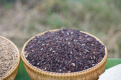 Black jasmine rice. Royalty Free Stock Photo