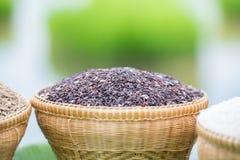 Black jasmine rice. Royalty Free Stock Photos