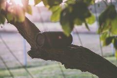 Black Jbl Bluetooth Speaker on Tree Branch Royalty Free Stock Photography