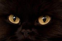 black katten Royaltyfria Bilder