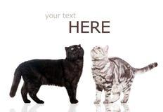 Black katten och den vita katten på white. Royaltyfria Bilder