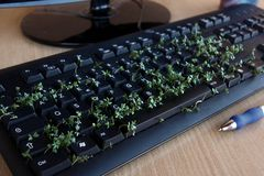 Black keyboard with garden cress : Environmental innovation. Stock Image