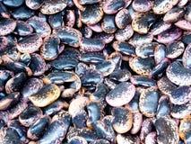 Black Kidney Beans Stock Photos