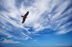 Black Kite in blue cloudy sky Royalty Free Stock Photo