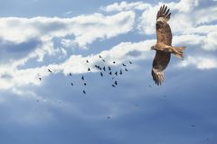 Flight of a bird in the sky Royalty Free Stock Photo