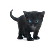 Black kiten  Stock Photo