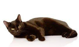 Black kiten.  on white background Royalty Free Stock Photography