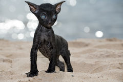 Black kitten Royalty Free Stock Photo