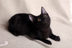 Black kitten Royalty Free Stock Photography