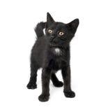Black kitten Stock Photos