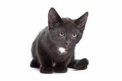 Black kitten Royalty Free Stock Photography