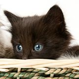 Black kitten Stock Photos