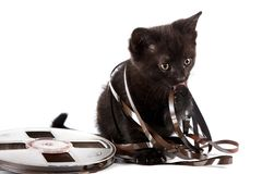 Black kitten Royalty Free Stock Photo