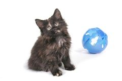 Black Kitten. Isolated on White Royalty Free Stock Photography