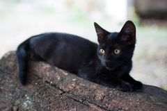 Black kitten Stock Photography