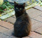 Black Kitten. An adorable black kitten posing for the camera Royalty Free Stock Images