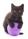 Black kitten. Royalty Free Stock Image