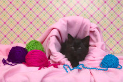 Black Kitten in a Basket With Yarn Stock Photos