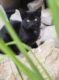 Black Kitten Behind Rocks Stock Image