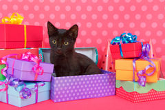 Black kitten in birthday presents. Fuzzy black kitten with yellow eyes, sitting in purple spotted birthday present box with colorful presents stacked around Royalty Free Stock Photo