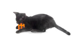 Black kitten biting dice Stock Image