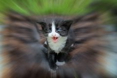 Black kitten in the blurry background. Stock Photography
