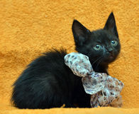 Black kitten with a bow Royalty Free Stock Photo