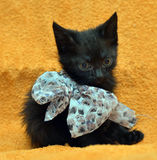 Black kitten with a bow Royalty Free Stock Image