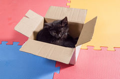 Black kitten in the box royalty free stock photography