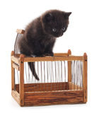 Black kitten. Stock Photo