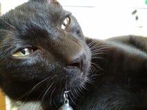 Black kitten cat Royalty Free Stock Photo