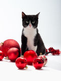 Black Kitten and Christmas decorations Royalty Free Stock Image