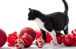 Black Kitten and Christmas decorations Stock Photography