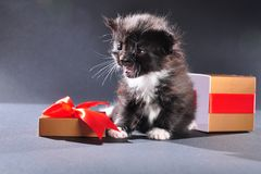 Black kitten from Christmas present box Royalty Free Stock Photos
