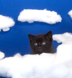 Black kitten in the clouds Royalty Free Stock Photos