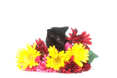Black kitten and colorful flowers Royalty Free Stock Photos